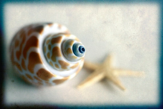 "Photography Art - Photography Love - ""Sea Shell"" 4x6 OE print by Magaly Burton"