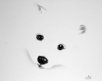 White Puppy Pencil Drawing Fine Art Print Signed by Artist