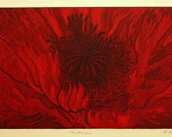 Turkenlouis - oriental poppy etching