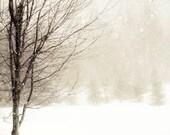 Winter Nature Photography, White, Brown, Landscape, Snow, Rustic Decor, Tree in Blizzard