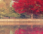 Red Maple Tree Print, Rideau Canal, Ottawa, Nature Photography, Fall, Olive, Burgundy, Autumn, Wall Decor