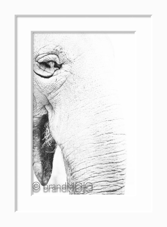 Pacyderm Photograph veternarian jungle species gentle giant disappear trunk buddha wise - The legend of the white elephant - fine art photo