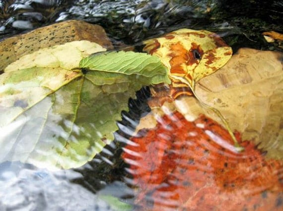 Leaf Photography ripples river underwater fall leaves water autumn orange yellow creek rustic Rush over me - fine art photo