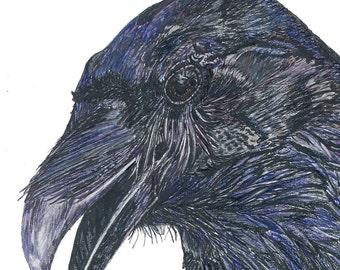 Knowing Raven Art print by Beth Surdut