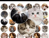 Cute Kittens Bottle Cap Images - 4x6 Digital Collage Sheet (No. 147) - 1 Inch Round Circles for Bottlecaps, Magnets, & So Much More