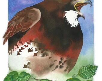 "ORIGINAL Watercolor Bird Painting / ""Alder Call"" / Swainson's Hawk"