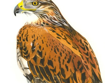 "Limited Edition GICLEE MINI Print / ""Chianti's Hawk"" / Watercolor Painting of a Ferruginous Hawk"