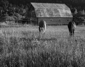 "Landscape Photography, Black and White, Rustic Barn & Pasture with Horses Grazing,Field, ""My American Dream"", Fine Art Print"