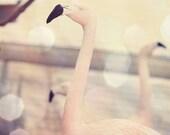 flamingo art, flamingo nursery art, flamingo photography, flamingo beach decor, flamingo bathroom art, pink flamingo art, flamingo pictures