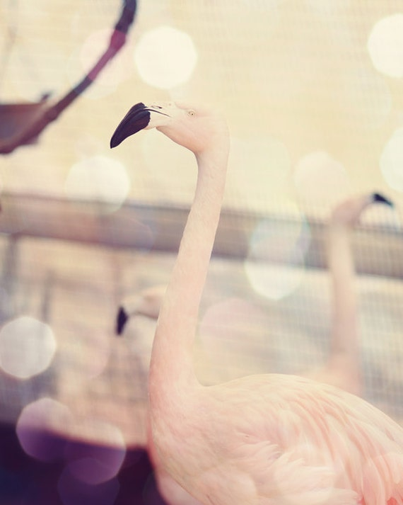 flamingo pictures, nursery art girl, pink beach decor, flamingo bedroom art, toddler girl room decor, pink bedroom art, flamingo nursery
