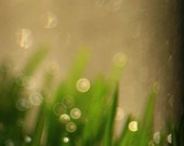 Peridot green bokeh art - sparkly bubbles of Emerald Chartreuse Tender Shoots of Grass- Thoughts Float 8x12 giclee