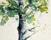 Aspen Tree with Snow - Watercolour Giclee Print 7x15 panoramic