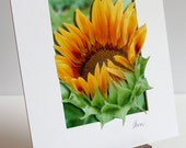 Fine Art Photograph - Multi-dimensional - Matted - Sunflower