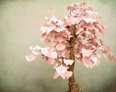 Fine Art Photograph - Gingkosai - Fine Art Print - Maple Tree - Soft Pastel Wall Art - Minimal Nature