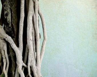 Fine Art Photograph - Branches - Wall Art - Tree - Nature