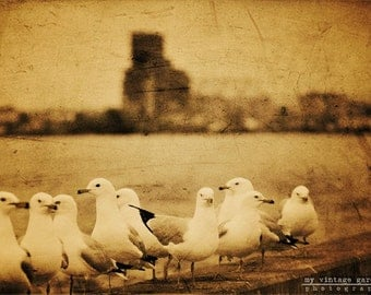 waiting in line-bird photography -bird photo- duluth mn photo-city photo-harbor (5 x 7 Original fine art photography prints) FREE Shipping