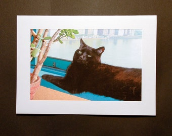 Black Cat, Blank Note Cards, Cat Greeting Cards, Photo Notecards, Stationery Gift Set, Cat Lover, Deborah Julian