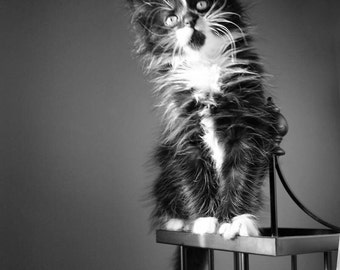 Black and White, Kitten, Fine Art Photograph, Cat Animal Photography, print, photo, postcards, cute, kitten, adorable, kids, Cat, Vintage,