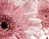Nursery Wall Art, Girls Room Decor, Spring Decor,  Flower Art, Floral Wall Decor, Pink Flower, Nature Photography
