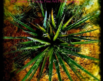 Yucca 8x8 matted photograph