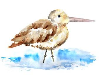 Whimsical beach decor, Brown, Blue, Watercolor bird, sandiper, art print, Beach Bathroom Art, Bird Watercolor Print