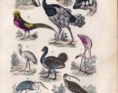 1880 antique BIRDS print, rhea bird, hand-colored, Partridge, ostrich, flamingo, spoonbill, turkey, Victorian print
