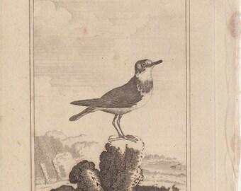 1812 Antique BIRD Engraving By Comte de BUFFON, plate 198, The Ringed Plover