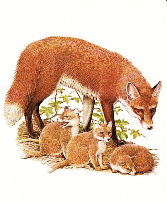 Vintage Animal Prints A Brown Fox With Her By