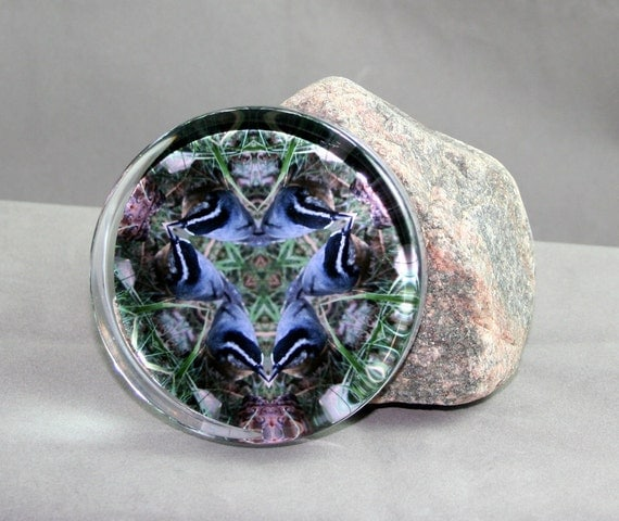 Nuthatch Glass Paperweight Boho Chic Mandala New Age Sacred Geometry Hippie Kaleidoscope Nestling Nuthatch
