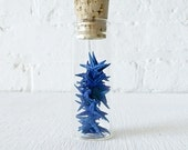 20 Blue Starfish Specimens in Glass Cork Vial
