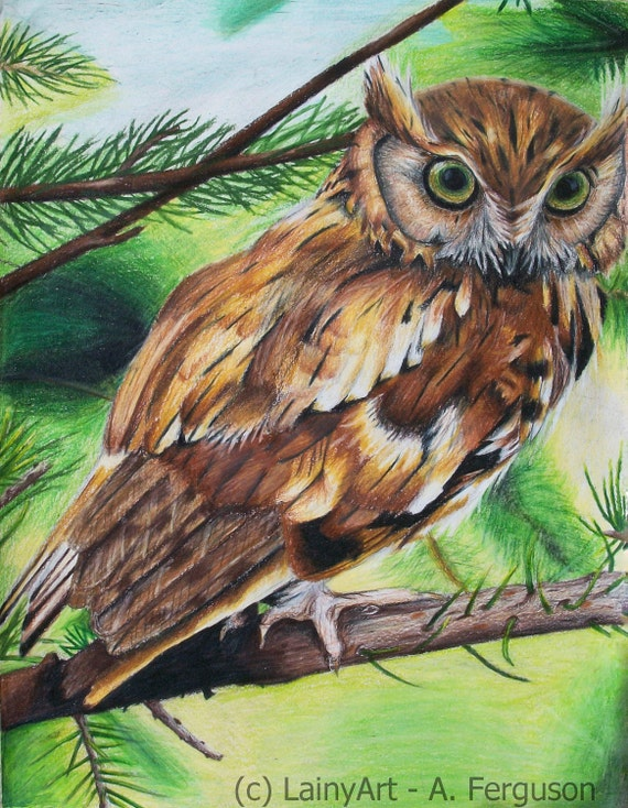 Colored Pencil Feather Colored Pencil Drawing