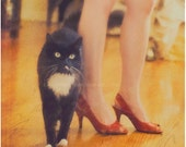 pet photography, black cat photograph, Catwalk, cute tuxedo cat furry feline legs ruby red high heels orange yellow fashion animal Halloween