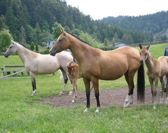 Lovely Mares in Horse Valley
