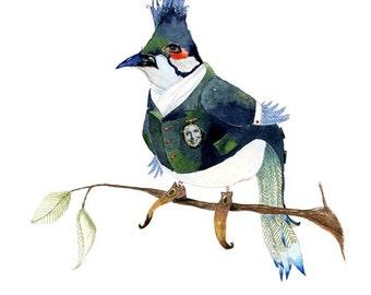 Giclee Print Bird illustration, 8x11 Eric the Bulbul Bird