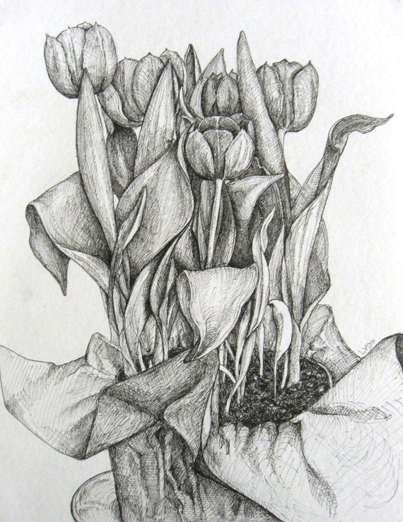 Tulips original black and white pen and ink botanical drawing