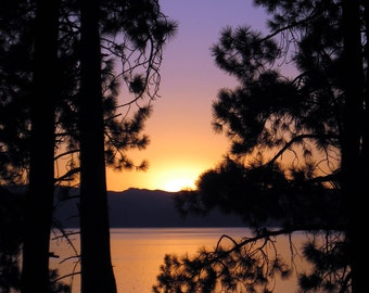 Lake Tahoe Through the Trees 8.5 x 11 Print