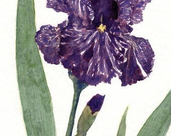 watercolor flower painting- Batik Iris - art print