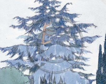 Larch, Tree, Evergreen, Vintage, 1920s, Art Print