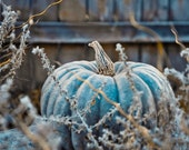 Blue Pumpkin Photo -  Waiting to be Turned into a Carriage - Fine Art Photo entitled Carriage in Waiting - 8 X 8