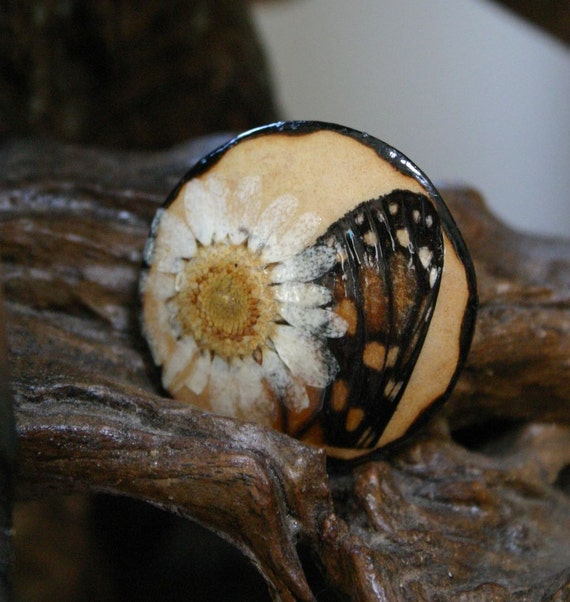 Nature Collage Gourd Pin, Butterfly Wing and White Daisy Gourd Brooch