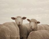 Smiling Sheep - Farm animal Photography - Neutral Wall art - Baby Nursery - Home Decor - Neutral grey and beige - Fine Art Photo  5x7