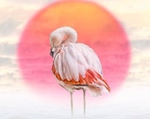 Pink Flamingo and Red Sun - a Fine Art Photograph