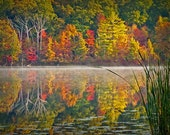 Autumn Lake Reflections of Colorful Trees with Cattails at Hall Lake in Southwest Michigan No.0582 - A Fine Art Fall Landscape Photograph