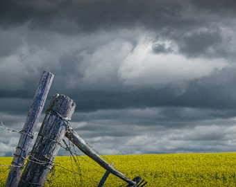 Canola Seed Field and Fence Corner in Southern Alberta Canada No.1860 - A Fine Art Landscape Photograph