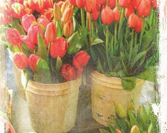 Tulips At The Flower Market - Photography - Flowers, Flower, Floral - Spring Bulbs - March April May - Decor - Salmon Pink Green