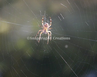 Spider on Web Photograph