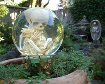 Human Fetal Skeleton in Glass Womb