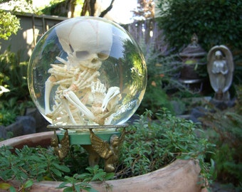Human Fetal Skeleton in Glass Womb