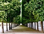 Paris Photography - Palais Royal Green Tree Photograph Parisian Landscape Symmetry Photo Emerald Green Art Print Elegant French Decor Park