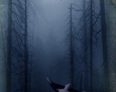 Black Wing  -  The Raven - 8 x 10 Fog and Full Moon Landscape Limited Edition Print by My Antarctica